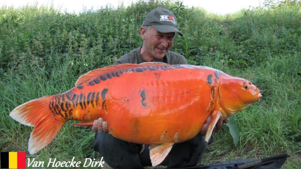 Van Hoecke Dirk